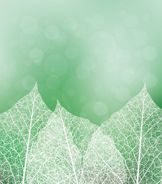 Рольшторы Белые листья