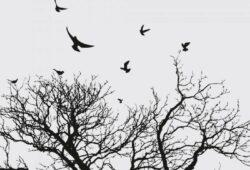 картинки птицы черно белые
