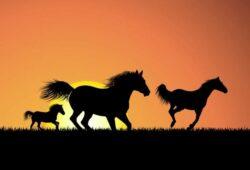 Животные и птицы Лошади