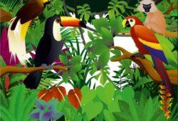 Тропичетские птицы
