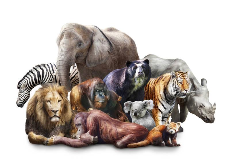 Римские шторы Животные саванны
