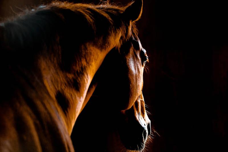 Римские шторы Лошадь