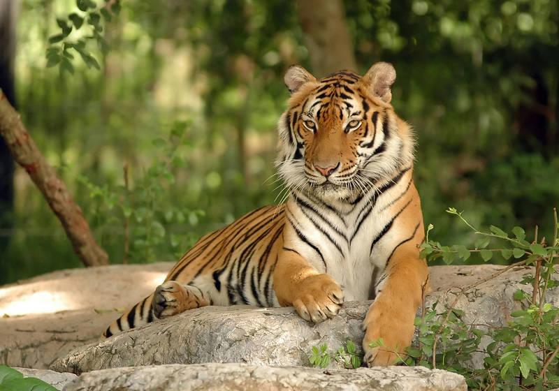 Римские шторы Тигр