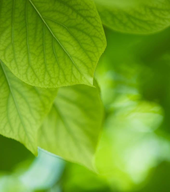 фотообои листья:
