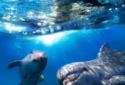 Римские шторы Подводный мир