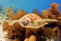 Печать на холсте Подводный мир