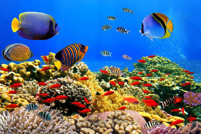 Фотообои под заказ Коралловый риф