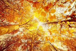 Фотообои Природа и пейзажи