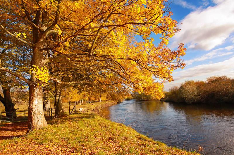 Фотообои под заказ Осенний лес