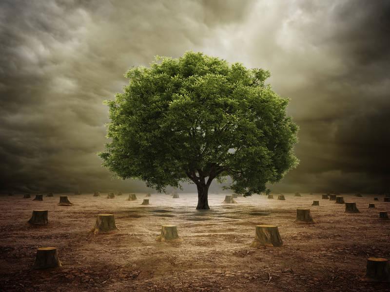 Постеры Одинокий дуб