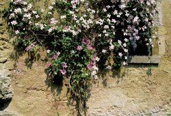 Цветы на доме