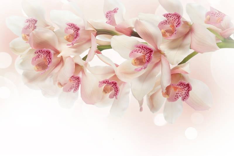 Рольшторы Орхидея