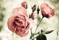Печать на холсте Цветы