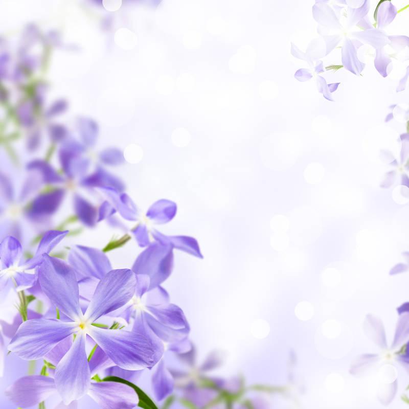 Постеры Сиреневые цветы