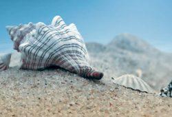 Скинали для кухни Море и пляжи