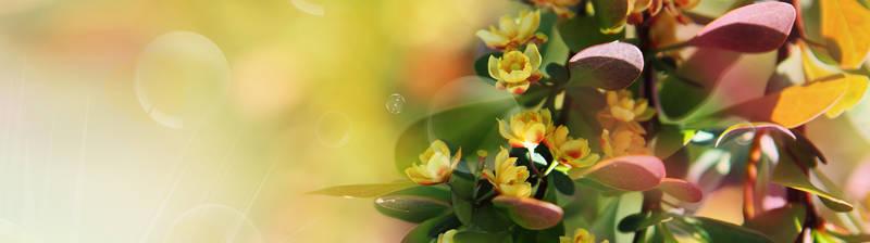Скинали для кухни Желтые цветы