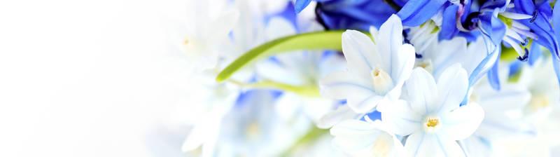 Скинали для кухни Белые с синие цветы