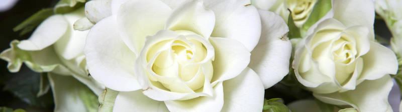 Скинали для кухни Белые розы