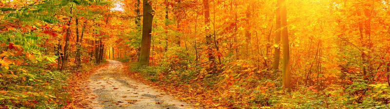 Скинали для кухни Осенний лес