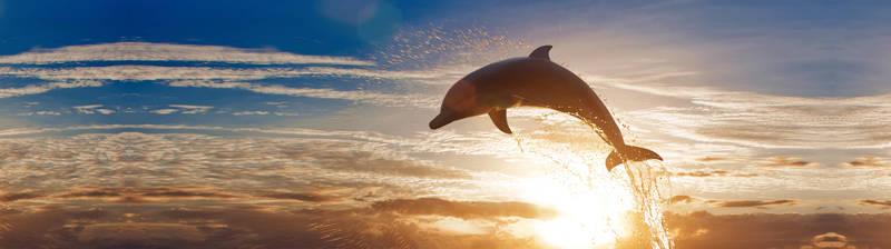 Скинали для кухни Дельфин