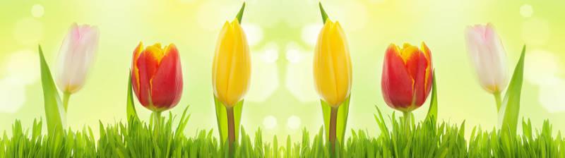 Скинали для кухни Разноцветные тюльпаны