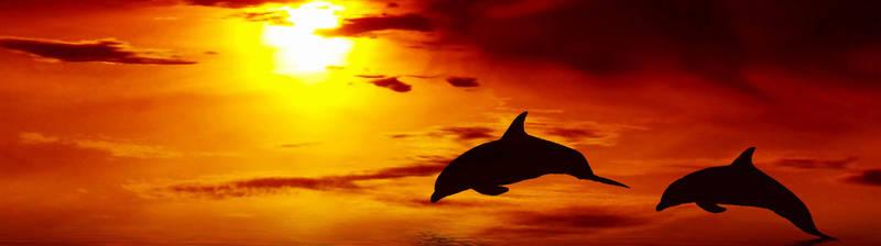 Скинали для кухни Дельфины