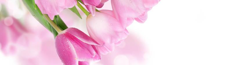 Скинали для кухни Розовые тюльпаны