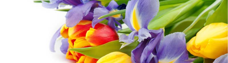 Скинали для кухни Тюльпаны и ирисы