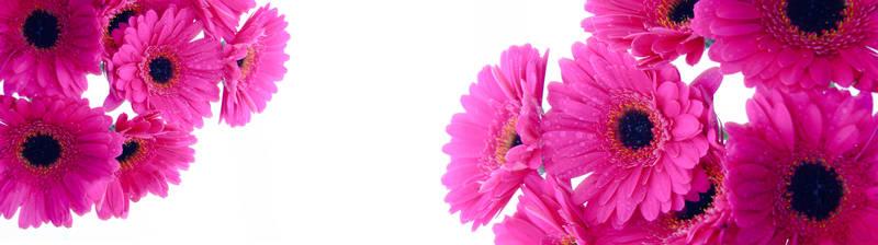 Скинали для кухни Розовые герберы