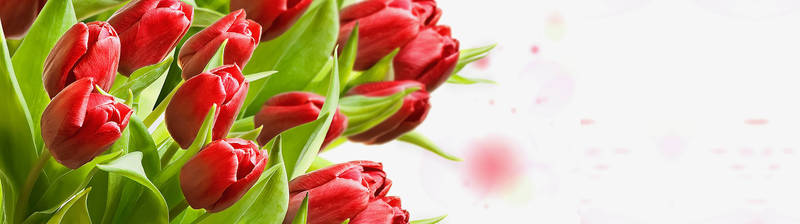 Скинали для кухни Тюльпаны