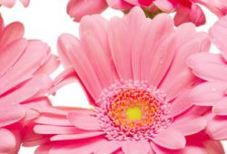 Римские шторы Цветы