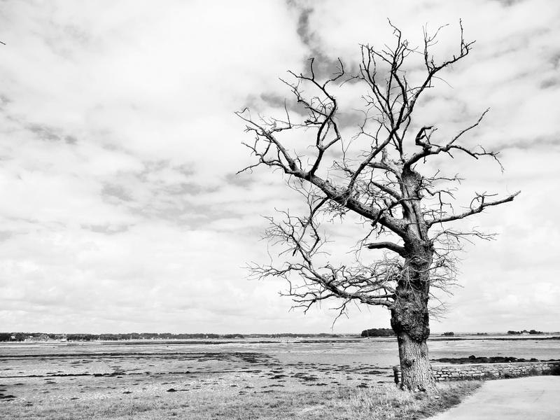 Одинокое древо, дизайн #05847