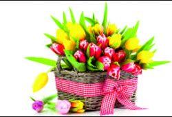 Тюльпаны, дизайн #05986