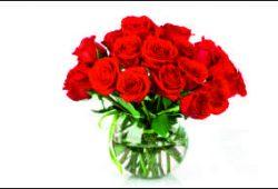 Розы, дизайн #05989