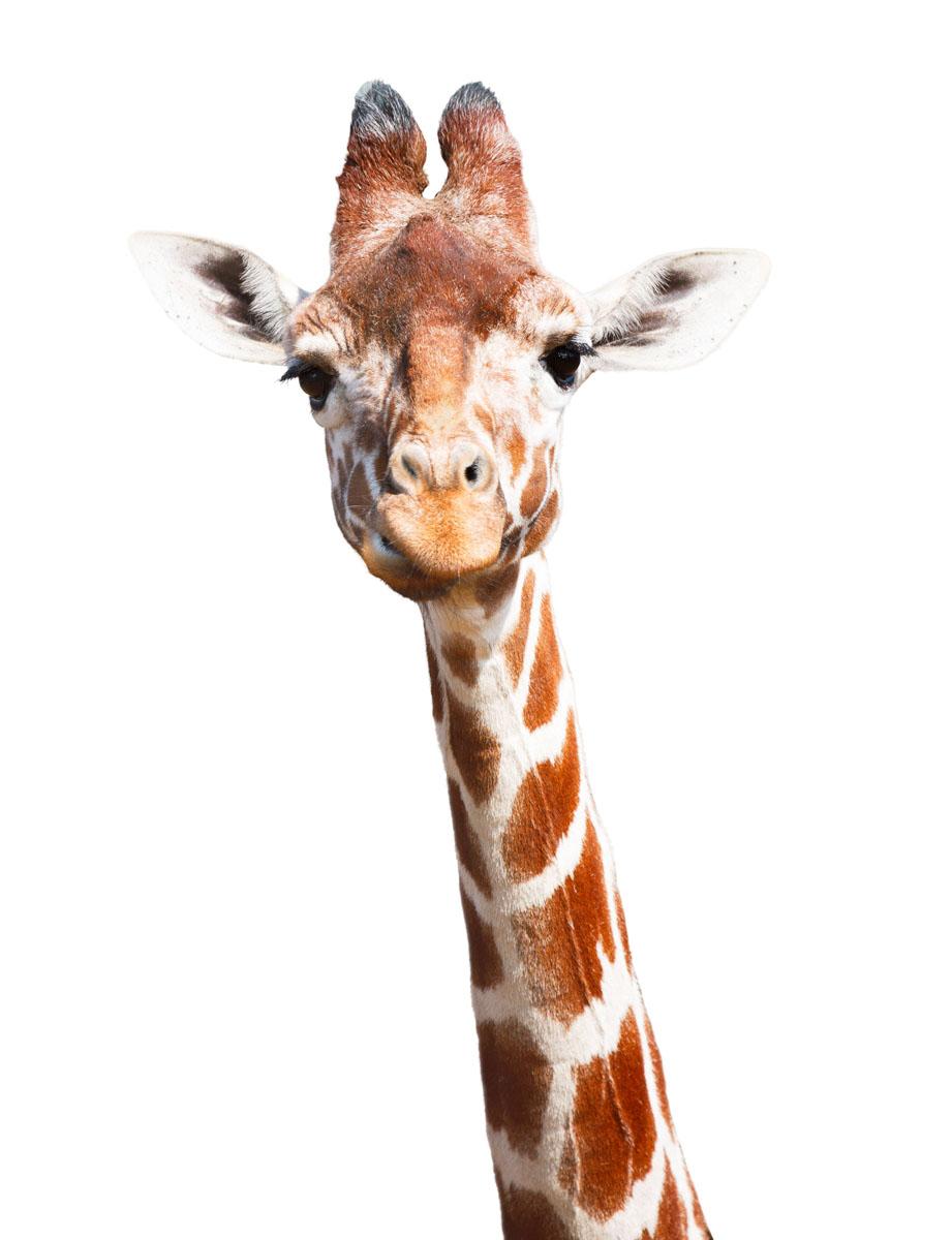 Японские панели Жираф, дизайн #06137