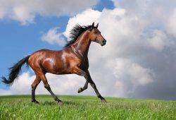 Лошадь, дизайн #06222