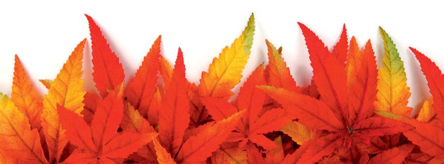 Осенние листья, дизайн #06457