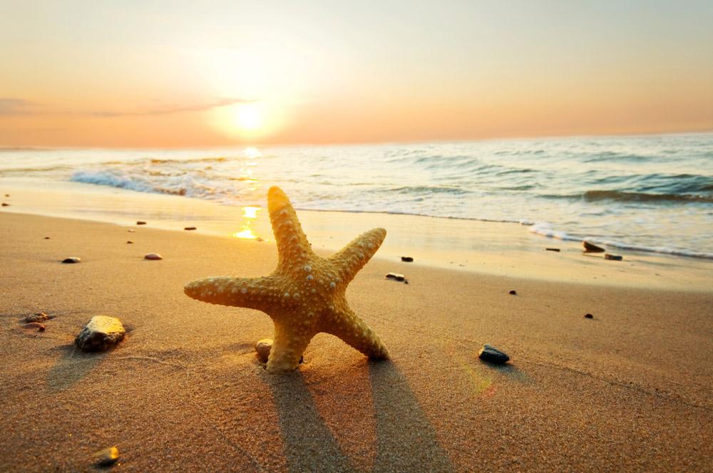 Римские шторы Морская звезда на берегу, дизайн #06576
