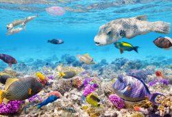 Подводный мир, дизайн #06893