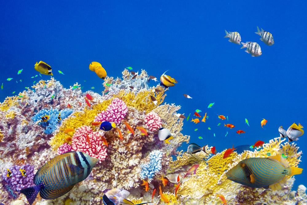 Американский тральщик разрушил уникальный коралловый