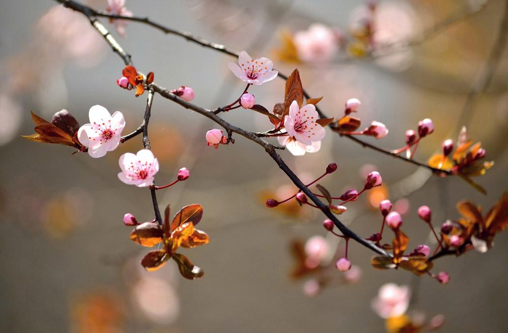 Весна, дизайн #06899