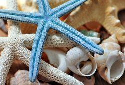 Морская звезда, дизайн #06929