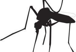 Комар, дизайн #06993