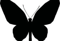 Бабочка, дизайн #06997