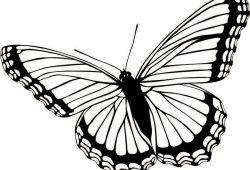 Бабочка, дизайн #07002
