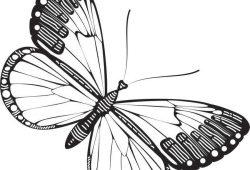Бабочка, дизайн #07005