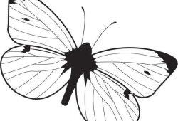 Бабочка, дизайн #07008