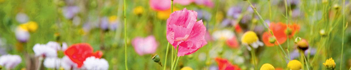 Полевые цветы, дизайн #07133