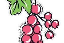Виноград, дизайн #07242