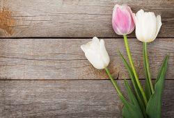 Тюльпаны, дизайн #07301
